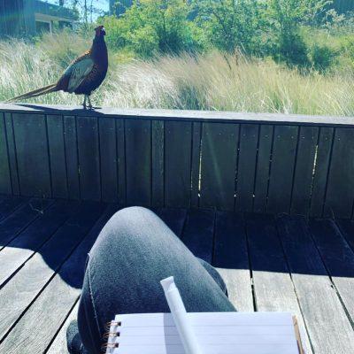 De wijsheid van de fazant 😄