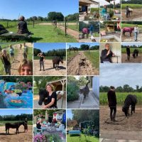 Collage van POP APK foto's van de training zelf