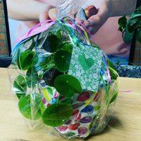 Foto van plantje met kaartje als cadeautje